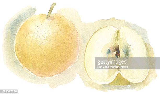 USA 2015 300 dpi Dave Johnson illustration of Asian pear