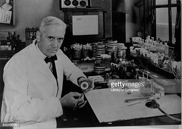Dr Alexander Fleming bacteriologist who discovered penicillin in 1928 works in his laboratory in London
