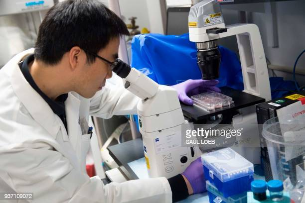 Dr Benjamin Jin a biologist working on immunotherapy for HPV cancers works in the lab of Dr Christian Hinrichs an investigator at the National Cancer...