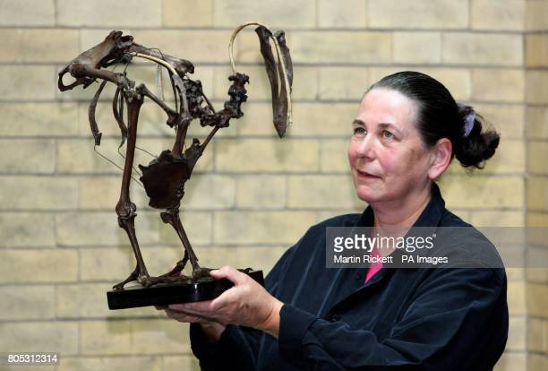 Dr Clem Fisher curator of vertebrate zoology looks at a rare skeleton of the Dodo extinct for more than 300 years which is on display at World Museum...