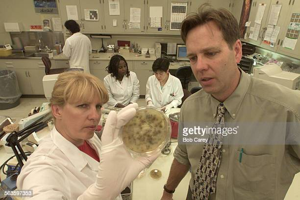 Dr Douglas M Frye right and microbiologist Joan Sturgeon looks at a culture dish with listeria gathered from turkey and cheese sandwiches that...