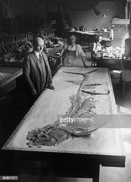 Dr James W Gidley of the Smithsonian Institution Washington DC after overseeing the mounting of an unusual late Cretaceous fossil fish Xiphactinus...