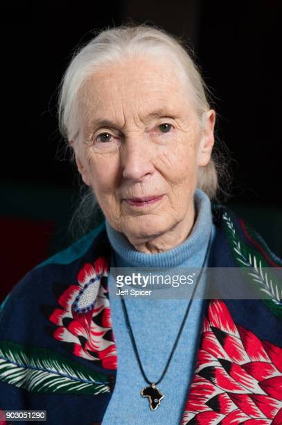 Dr Jane Goodall attends a special screening of BAFTA nominated National Geographic documentary 'Jane' in her hometown at Odeon Bournemouth on January...