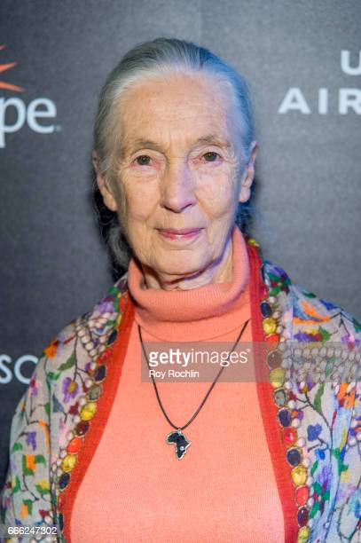 Dr Jane Goodall attends Disneynature with the Cinema Society host the premiere of Born in China at Landmark Sunshine Cinema on April 8 2017 in New...