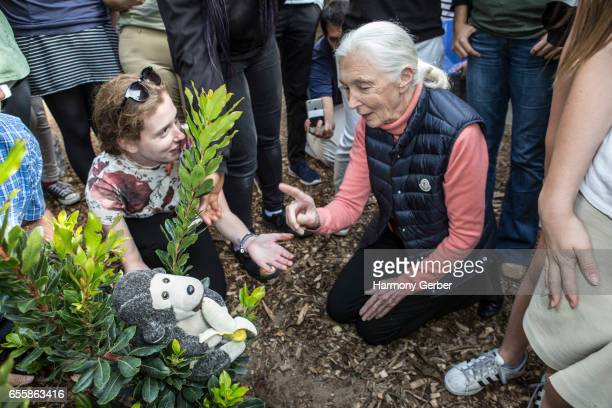 Dr. Jane Goodall plants a tree with students at the Environmental Charter High School on March 20, 2017 in Lawndale, California.