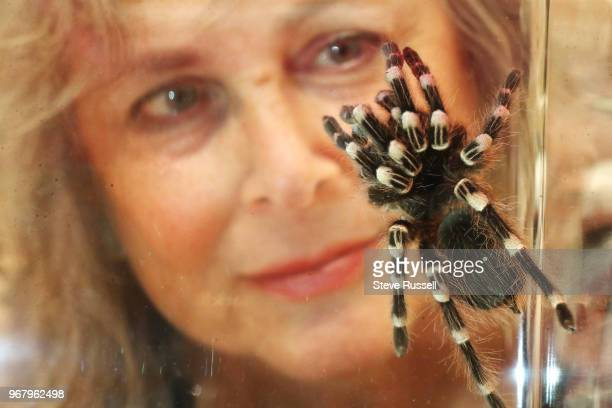 TORONTO ON JUNE 5 Dr Linda Rayor is supplies the spider exhibit with spiders including a Brazilian white banded tarantula is one of the larger...