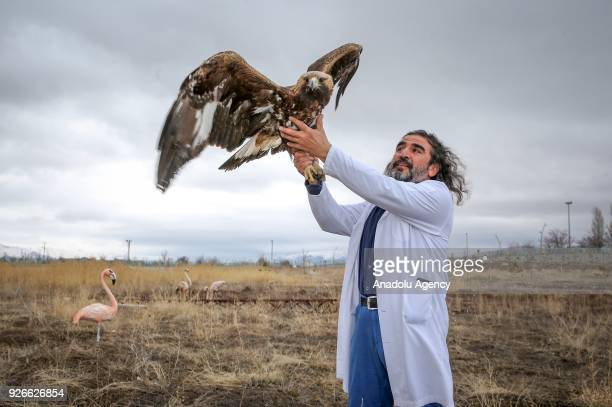 Dr Lokman Aslan who is pioneer of Wildlife Rehabilitation Centre holds a hawk in Turkey's Van province on March 03 2018 Aslan helps wild animals...