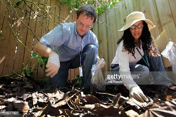 Dr Paul Skelley Florida Department of Agriculture and Olga Garcia Environmental Specialist Florida Department of Agriculture look for Giant African...