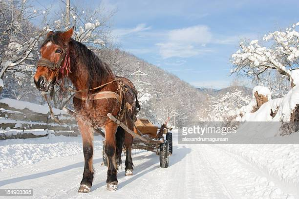 draft horse - shire horse stock pictures, royalty-free photos & images