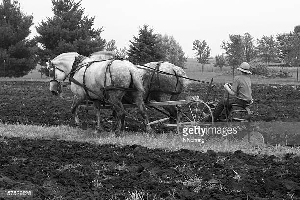 draft horses plowing - working animal stock pictures, royalty-free photos & images