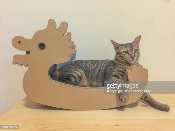 dragon boat and cat - dragon boat festival stock pictures, royalty-free photos & images