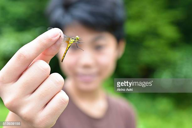 Dragonfly and boy