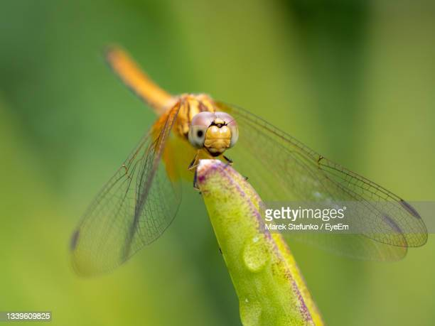 dragonfly close-up with in gardens by the bay - marek stefunko stock pictures, royalty-free photos & images