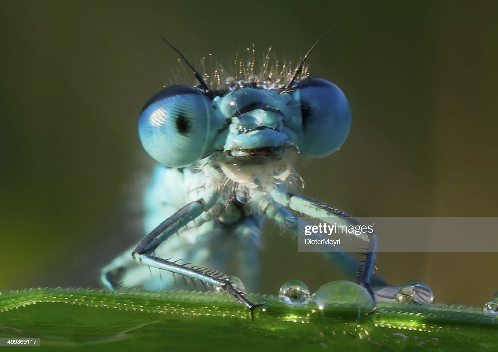 Dragonfly in the morning dew : Stock Photo