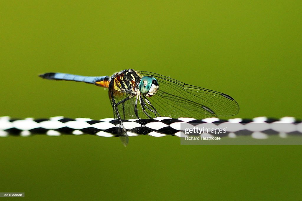 A dragonfly is seen on a rope during the second round of THE PLAYERS Championship at the Stadium course at TPC Sawgrass on May 13, 2016 in Ponte Vedra Beach, Florida.