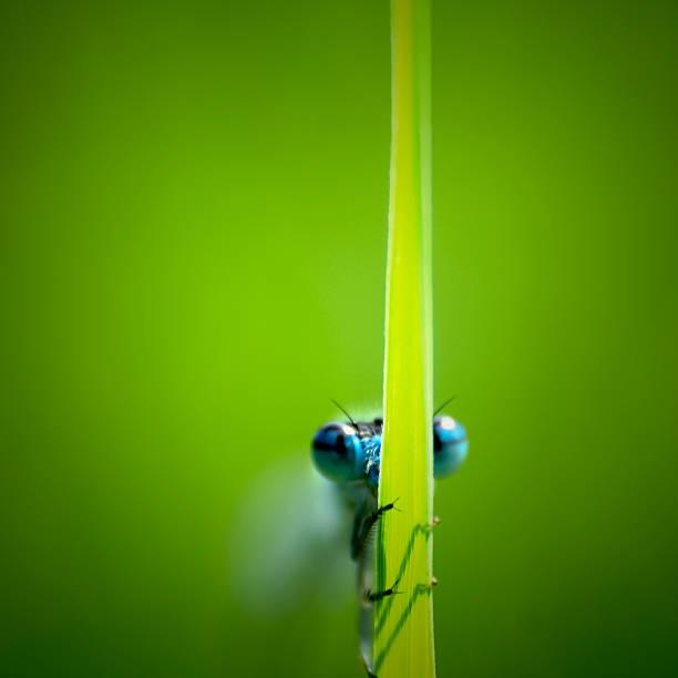 Dragonfly on a grass leaf