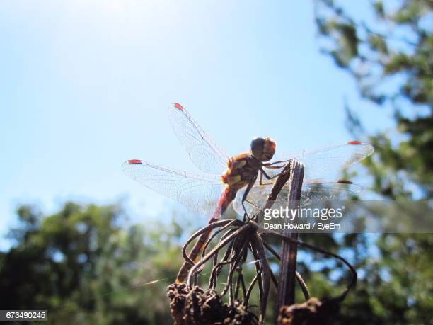 Dragonfly On Dead Plant