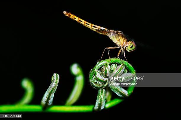 Dragonfly on fern leaf.