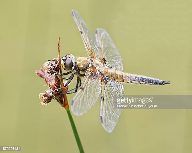 dragonfly on plant - michael hruschka stock pictures, royalty-free photos & images
