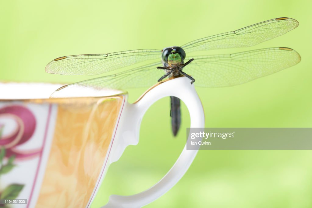 Dragonfly on Teacup : Stock Photo