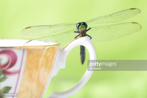 dragonfly on teacup - ian gwinn stock pictures, royalty-free photos & images