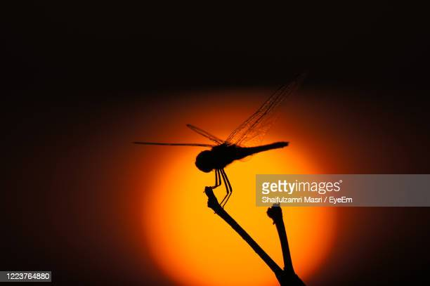 dragonfly perched at dead stick over beautiful sunset - shaifulzamri stock pictures, royalty-free photos & images