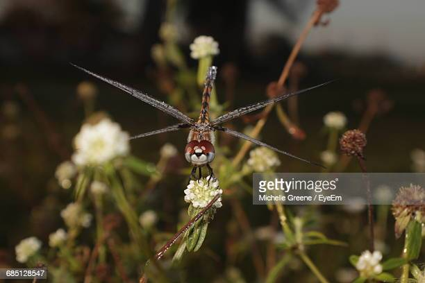 Dragonfly Perching On Flower