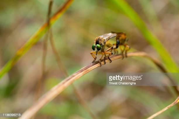 dragonfly - tierpaarung stock-fotos und bilder