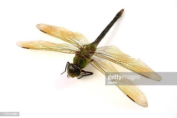 libelle. - töten stock-fotos und bilder