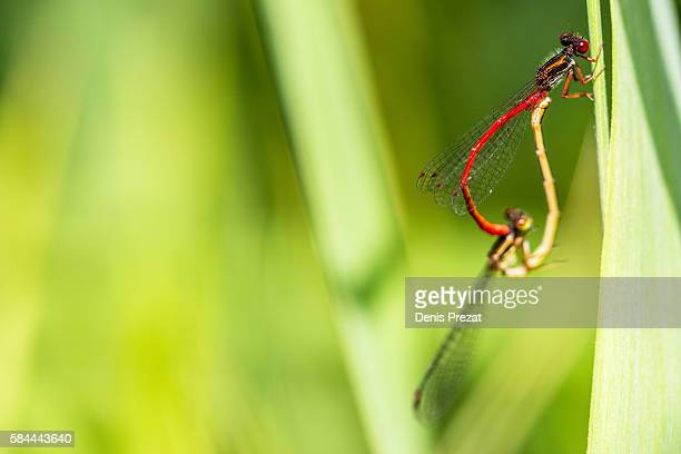 dragonfly - fleur flore stock pictures, royalty-free photos & images