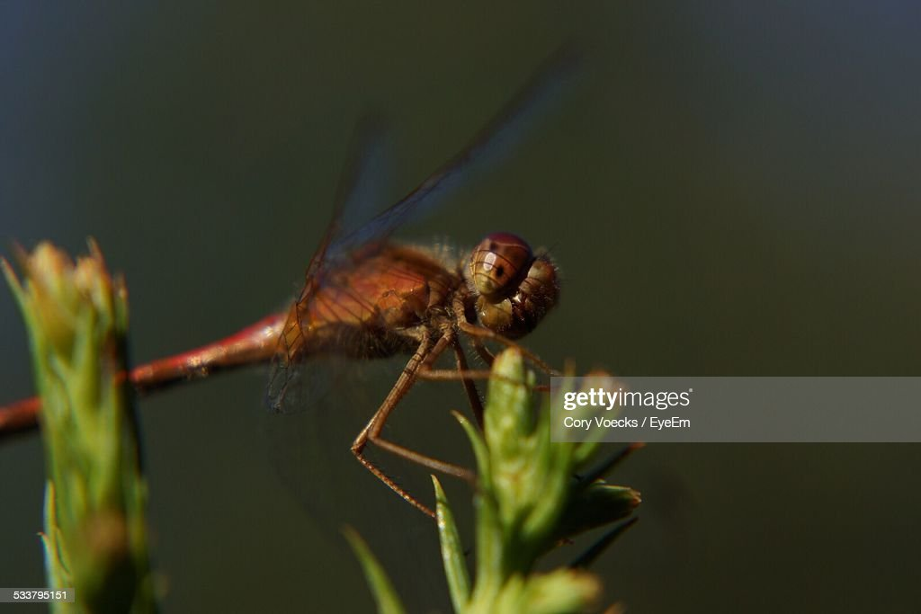 Dragonfly Sitting On Plant : Foto stock