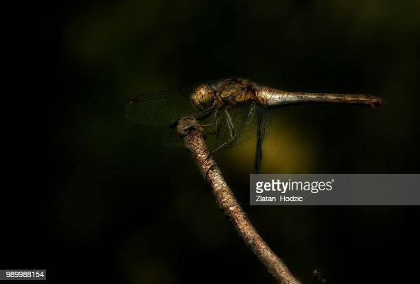 Dragonfly's elegance