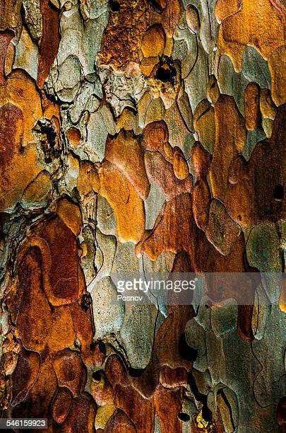 dragonscale - ポーキュパイン山脈ウィルダネス州立公園 ストックフォトと画像