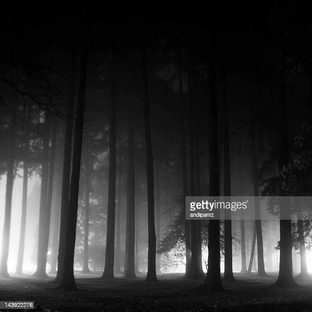 Dramatic black and white silhouette of trees on foggy night