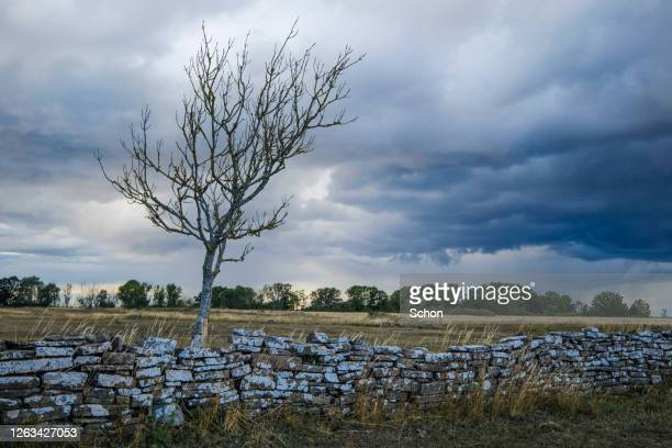 dramatic clouds over a tree and a stone wall in summer - エーランド ストックフォトと画像