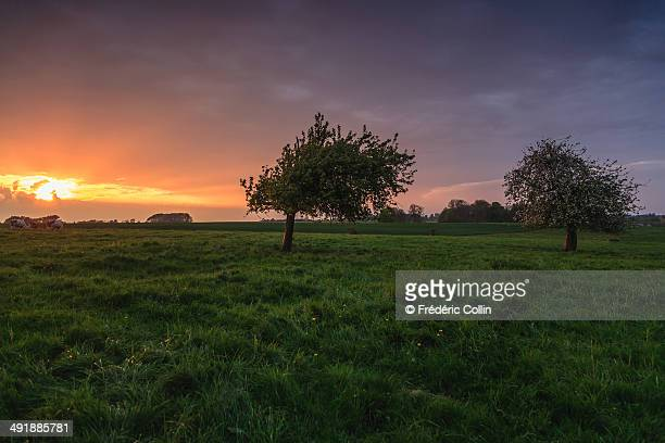Dramatic colorful sunset around trees in blossom