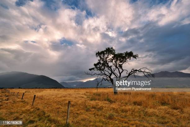 dramatic landscape with alone tree in new zealand - otago region stock pictures, royalty-free photos & images