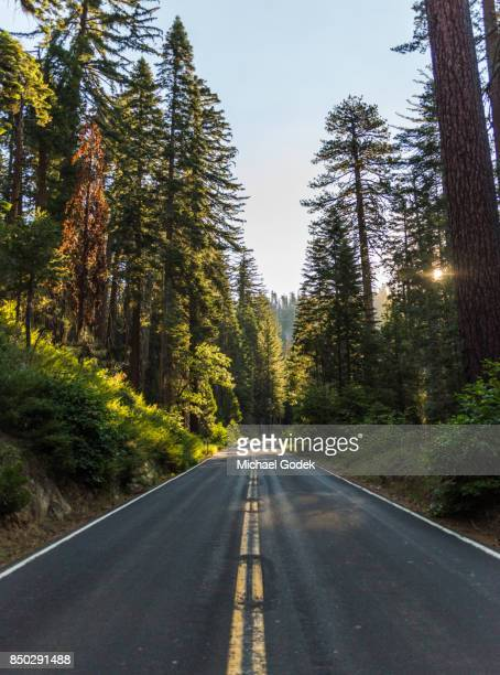 dramatic light peers through the trees on empty winding road - dividing line road marking stock photos and pictures
