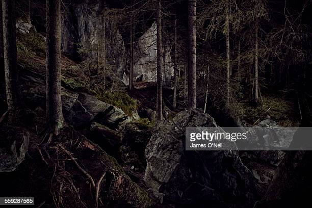 Dramatic lighting in forest