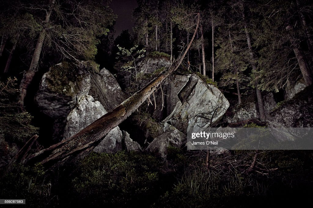Dramatic lighting in forest : Stock-Foto