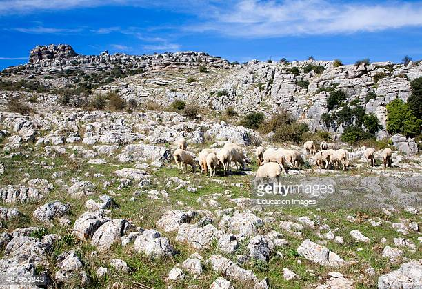 Dramatic limestone scenery of rocks shaped by erosion and weathering at El Torcal de Antequera national park Andalusia Spain