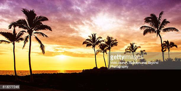 Dramatic panoramic sunset against palm trees