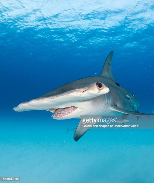 dramatic - south bimini stock photos and pictures