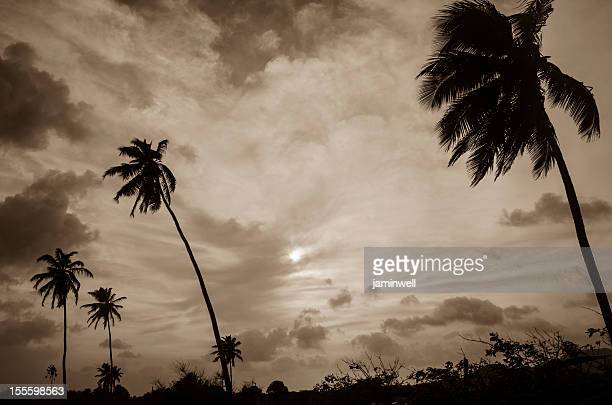dramatic scenery with palm trees and sky