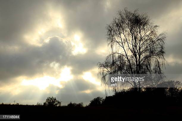 Dramatic sky on dark foreground with tree