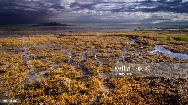 dramatic sky over lake, great salt lake, salt lake city, utah, usa - great salt lake stock pictures, royalty-free photos & images