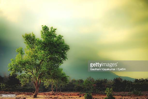 Dramatic Sky Over Landscape With Trees