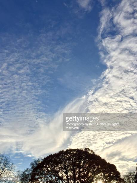 A dramatic sky with white clouds viewed above tree tops filling up a blue sky