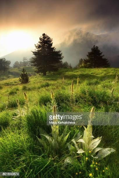 Dramatic sunrise on a green meadow in Slavyanka