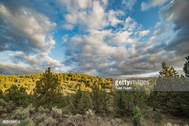 dramatic sunset over a juniper forest - western juniper tree stock pictures, royalty-free photos & images